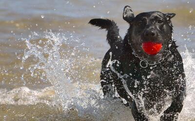 Terror por balacera muy cerca de la playa para perros en Chicago
