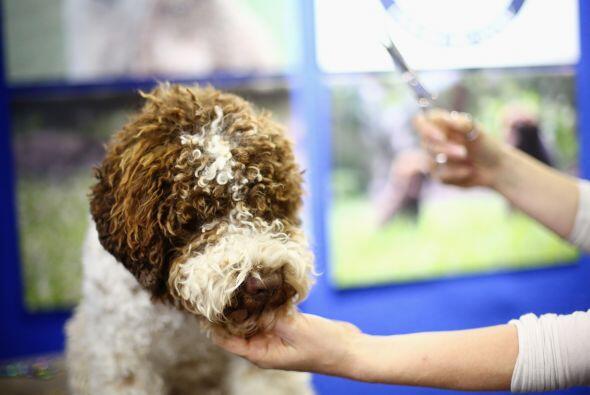 Se llevó acabo el 'Dog Lovers Show' un evento para los amantes de...