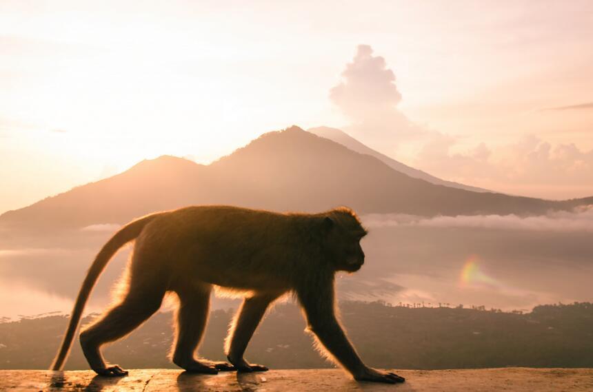 ¡Descubre lo que el mes del Mono trae para ti! 1.jpg