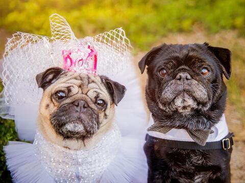 Una maravillosa y excepcional boda de perritos