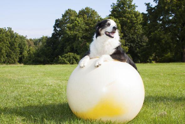 Otros expertos mencionan que enseñarle a tu perro algunos trucos nuevos,...