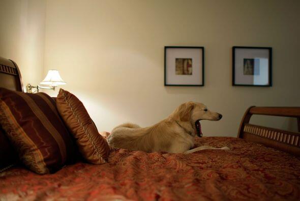 Si tu mascota no tiene un lugar determinado en donde dormir, seguro quer...