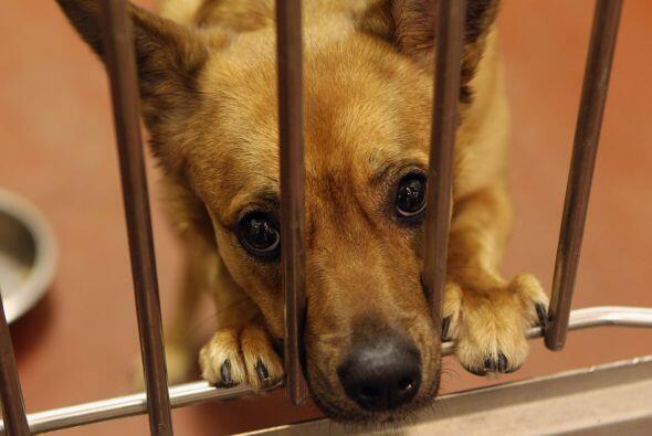Cada día miles de perritos, por lo general adultos, son abandonad...