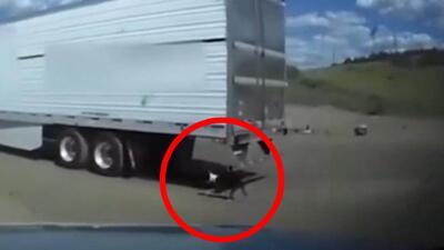 Patrullero salva la vida a un perro atado al parachoques de un camión en movimiento