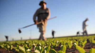 La región de América Latina y el Caribe puede ayudar a alimentar a la po...