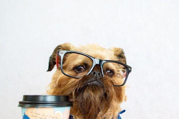 Digby es un perrito muy juvenil, que disfruta del café.