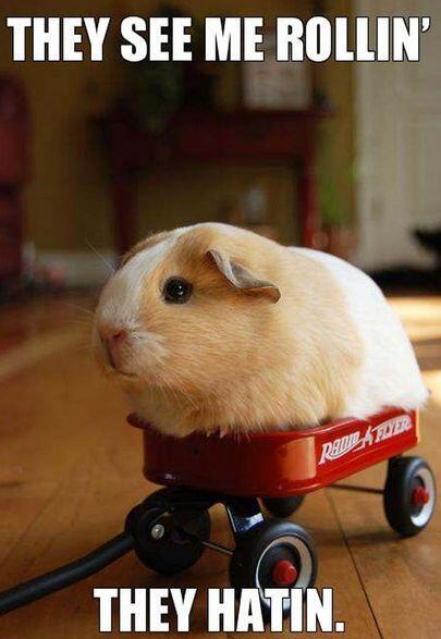 """""""They see me rollin', they hatin'""""."""