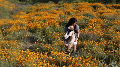 El desierto de California se tiñe de colores este marzo