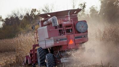 Recolección maíz en Iowa