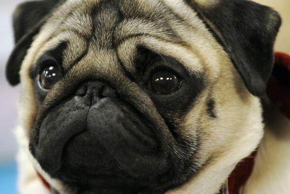 Al adoptar o comprar un cachorro, conviene que te prepares con anticipac...