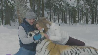 Montserrat compartió una tarde de belleza con un tigre siberiano