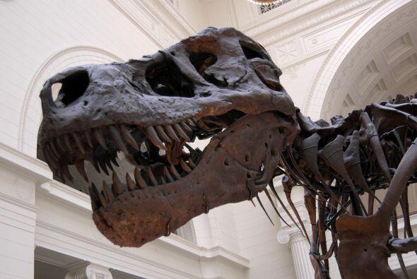 10. Glen Rose, Texas. Tierra de dinosaurios por excelencia, tu familia e...