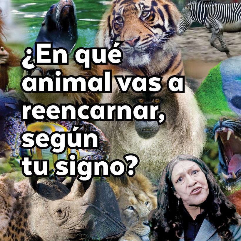 ¿En qué animal vas a reencarnar según tu signo? 84.png