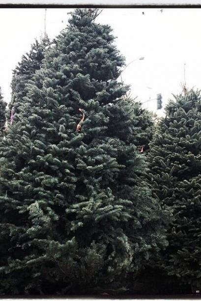 El 'ángel' Alessandra Ambrosio también fue a elegir un árbol muy grande...