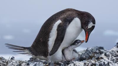 En fotos: el amor y la guerra en el mundo de las aves