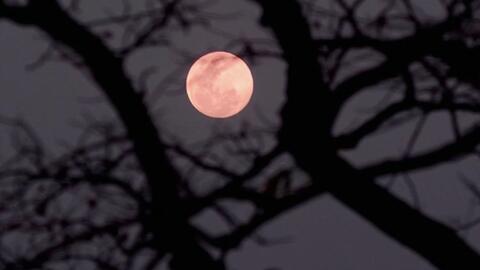 Curiosidades de la 'Luna rosa' que podrá apreciar esta semana