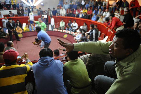 Ecuador cuenta con alrededor de 2,500 galleras que emplean de 8 a 15 per...