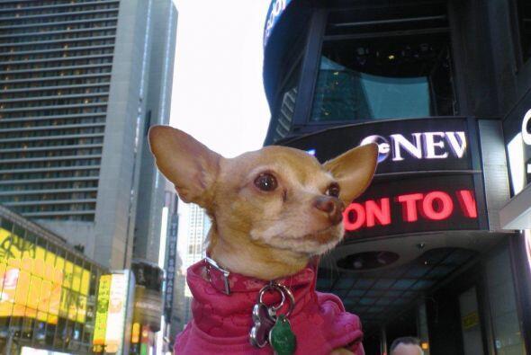 Antes de volver al hotel, Honey decidió visitar algunas tiendas.