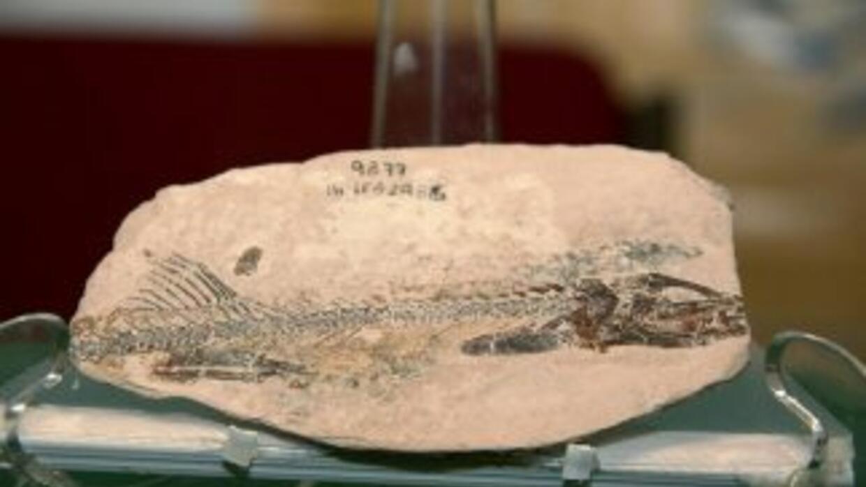 En Chiapas, científicos mexicanos anunciaron el hallazgo de un fósil de...