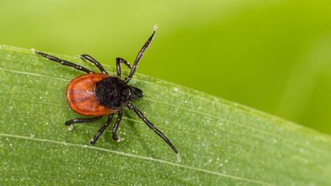 Para evitar las mordeduras, no frecuentes áreas boscosas y zonas con arb...