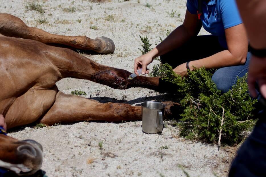 El animal estaba herido y no podía moverse.