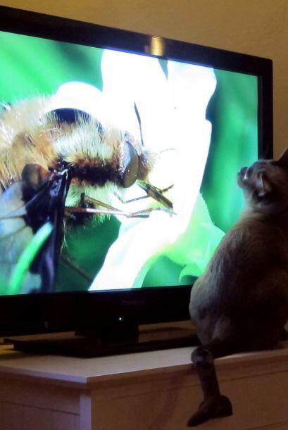 A través de la televisión Coco ha descubierto un mundo inc...
