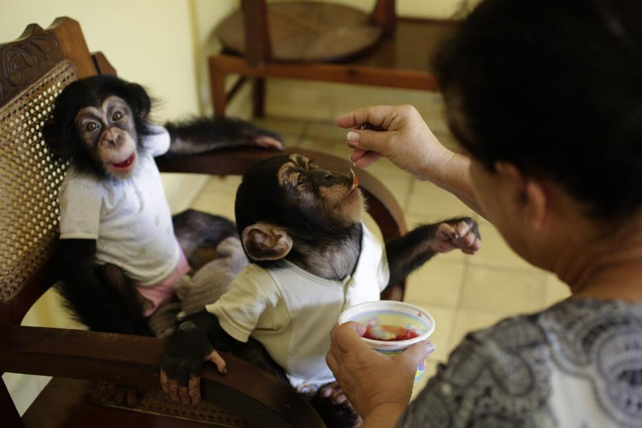 Monkey business in Havana 29.jpg