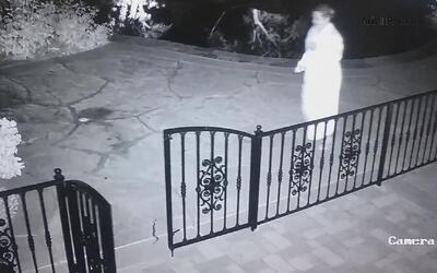 En video: Agarró una culebra creyendo que era el juguete de su perro