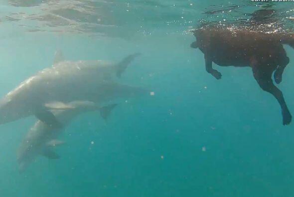 La grabaron retozando con un grupo de delfines en el Océano Índico, fren...