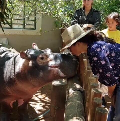 Salma Hayek besa hipopotamo