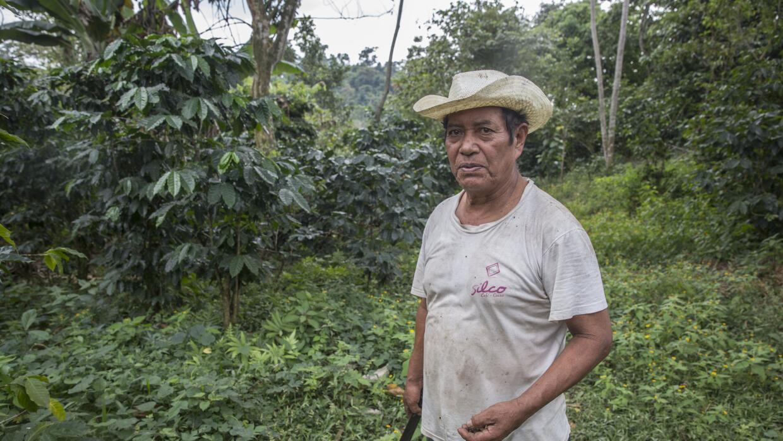 Paulino Morales López es parte de una modesta cooperativa de agricultore...