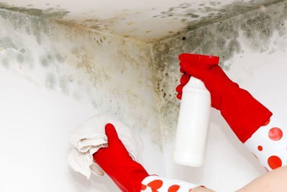 El cambio clim tico podr a empeorar las ya desagradables for El vinagre desinfecta
