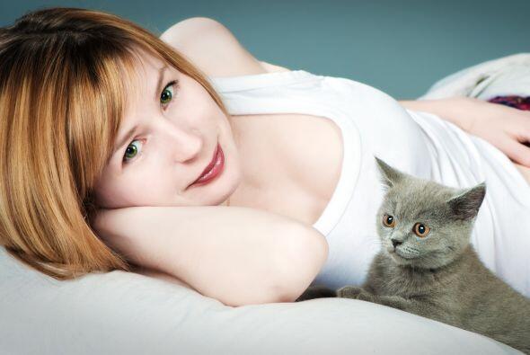 Muchos especialistas aseguran que los gatos no pueden transmitir estas e...