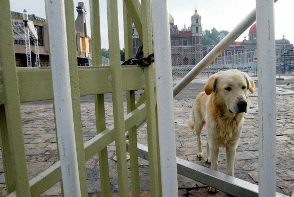 La pérdida de una mascota no es solamente triste para la familia sino ta...