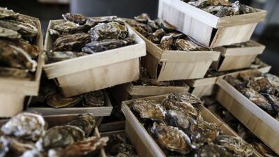 Muere un hombre que contrajo una bacteria luego de comerse una ostra cruda en Florida