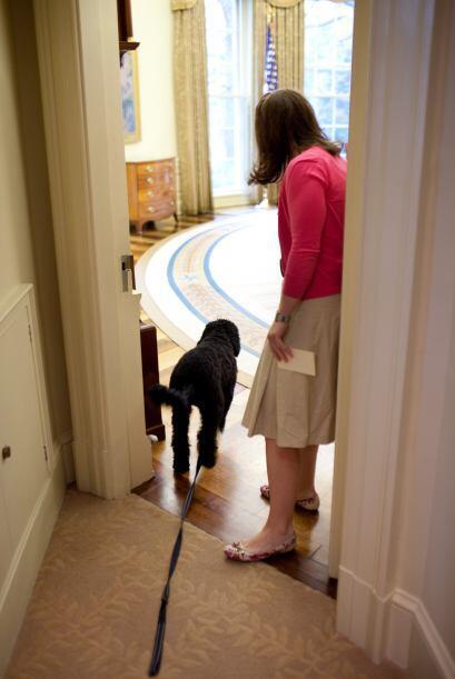 Bo visita la oficina de Papá: el Despacho Oval de la Casa Blanca.