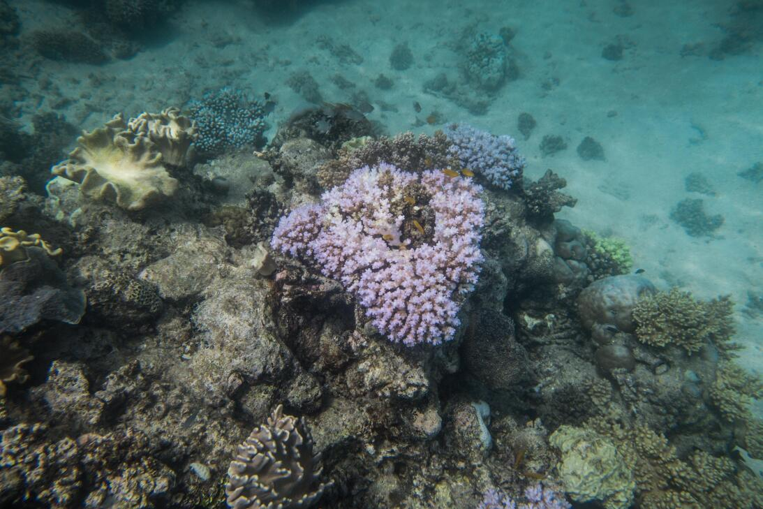 La Gran Barrera de Coral de Australia como ejemplo de resilencia natural...