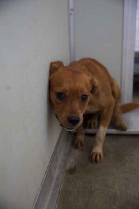 Autoridades en el sur de California rescataron a 35 perros de una vivienda.