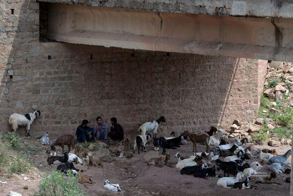 Estos hombres van con sus animales debajo de un puente en Karachi, trata...