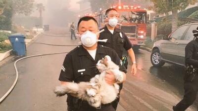 Oficial del LAPD rescató a un gato de los incendios en el condado de Los...