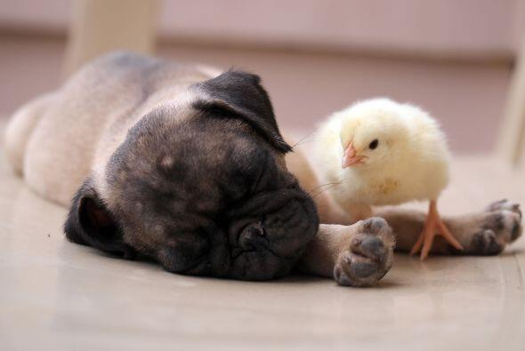 Son tan cercanos que se quedan dormidos juntos.