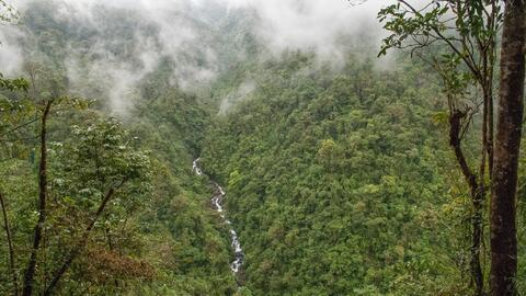 Un tercio del planeta está cubierto de bosques y son el hogar del...