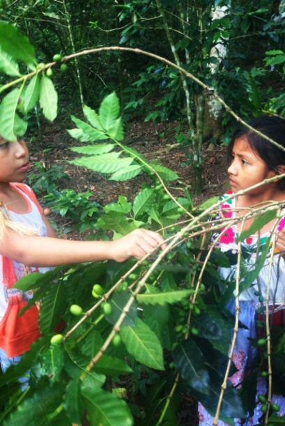 La mayoría de los niños campesinos trabajan en plantaciones de café. La...