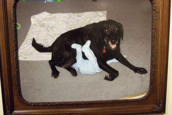 Esta mascota se toma muy en serio su tarea de proteger a sus amos.