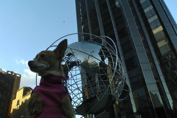 ¡Wow! Honey conoció el Columbus Circle donde el mundo parece de acero.