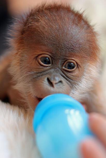 Este adorable bebé pesa solo cuatro libras.