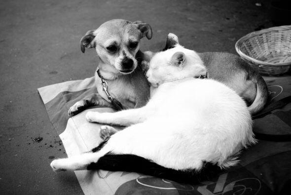 ¿Gato o perro? Si decidiste, junto a tu familia, tener una mascota que l...