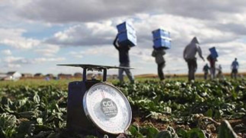 Miles de trabajadores agrícolas de Alabama se marcharon a otros estados...