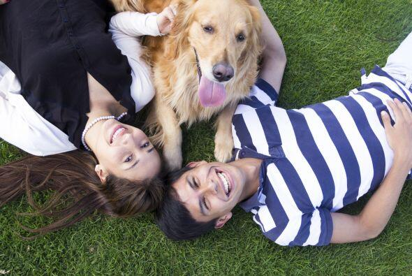 Tener una mascota incrementa nuestro bienestar emocional además de otros...