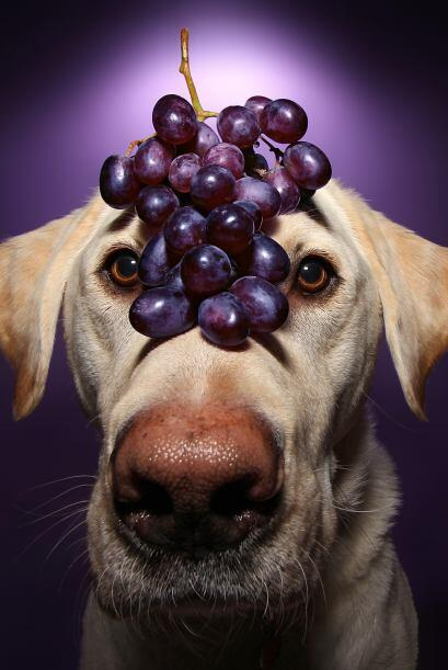 Estas uvas resaltan sus ojos, ¿no te parece?
